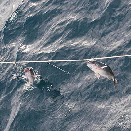 poisson pêchés à la ligne