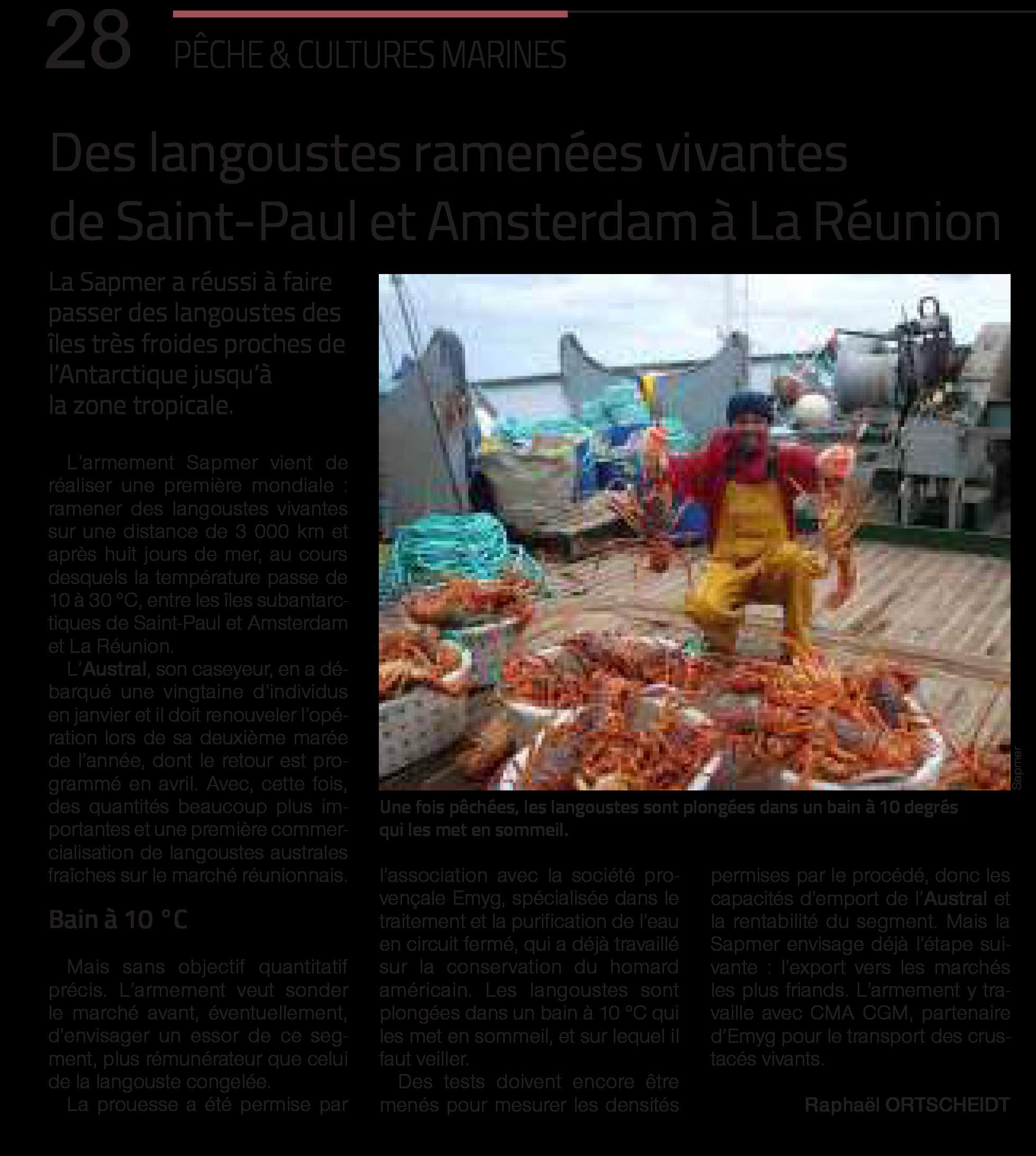 Des langoustes ramenées vivantes de Saint-Paul et Amsterdam à La Réunion